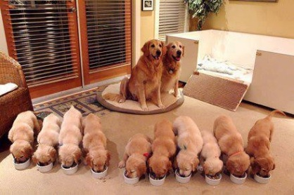 Puppies and Parents