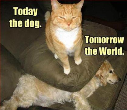 Today the dog...