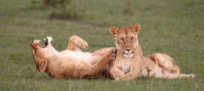 comedy-wildlife-photography-awards-shortlist-2016-16-57fb40b431364__880